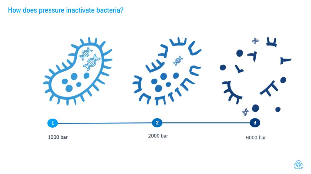 Wie inaktiviert HPP Bakterien? Infografik