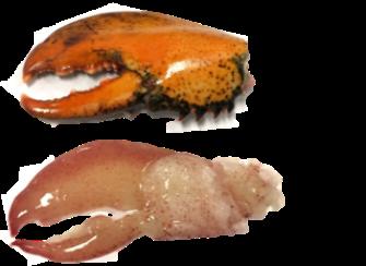 Meeresfrüchte in bester Qualität