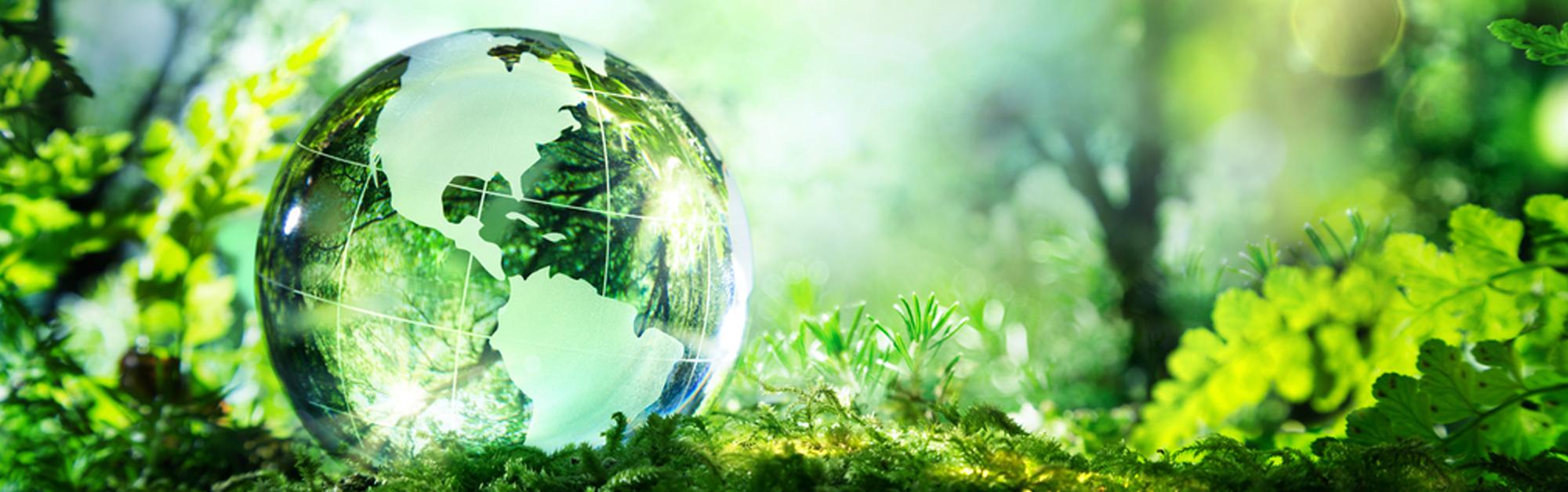 Prodotti della gamma Green