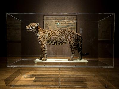 Voorbeeld Lijmen Ispa Plastics museumkap